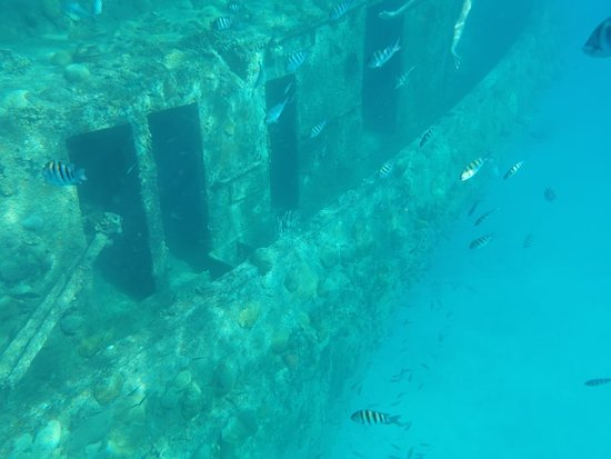 Obraz Barbados Shore Excursion: Party Cruise and Snorkel Tour with Lunch
