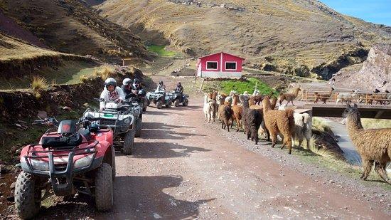 Pitumarca, Перу: momentos que no podemos dejar de pasar , llamas en nuestro camino a montaña de colores