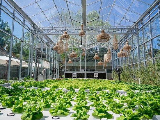 Tara Green Hydroponic Farm & Cafe