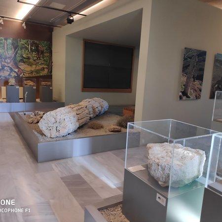 Sigri, Yunanistan: Απολιθωμένο δάσος Σιγρίου . Το μοναδικό στον κόσμο με απολιθωμένο κορμο μαζί με την ρίζα του