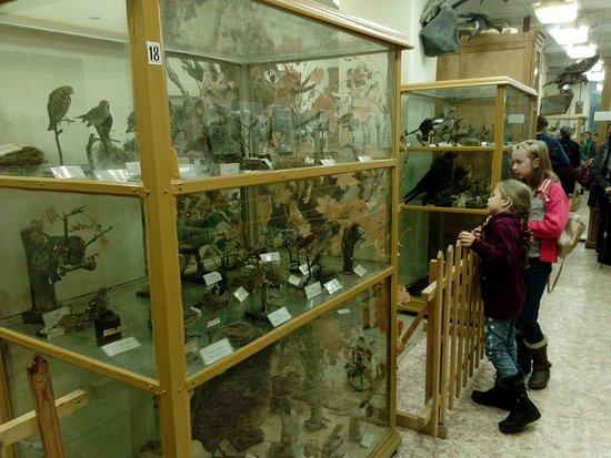 Borok, Rusia: В одном из трёх залов музея природы.