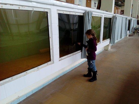 Borok, Rusia: Музей - аквариум Института биологии внутренних вод в Борке