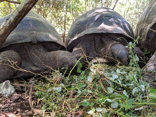 Jozani Sea Turtle Sanctuary