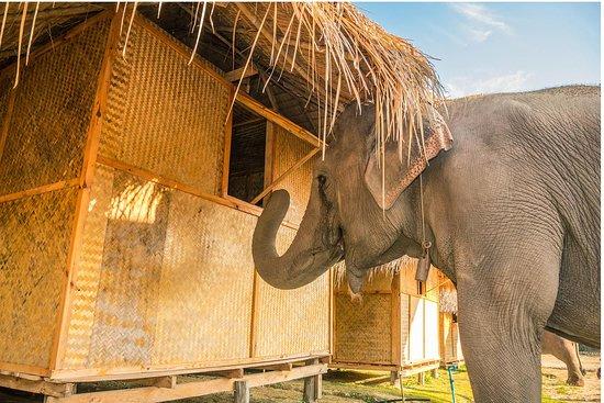 Elephant Heaven Sanctuary