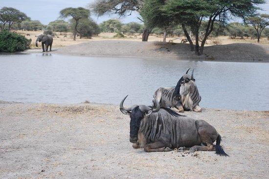 Booking Tanzania