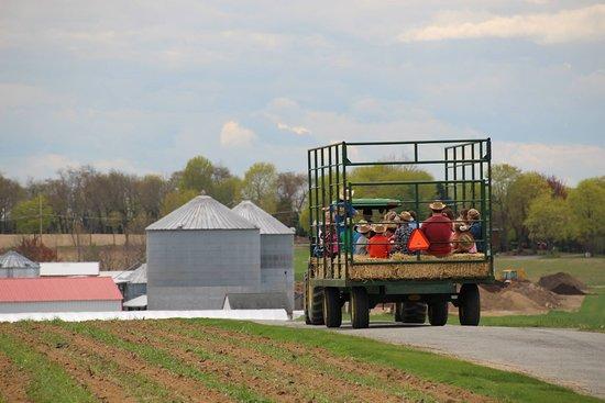 Donaldson Farms
