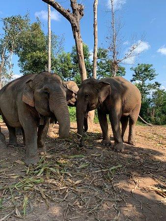 Half-day: Elephant Experience at Elephant Village Sanctuary 사진