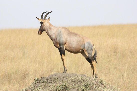 Trezaki Safari Tours