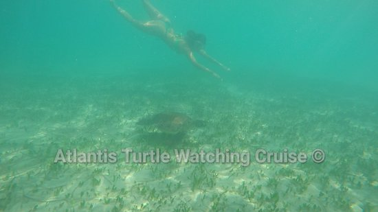 ‪Atlantis Turtle Watching Cruise‬
