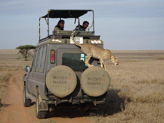 Moshi Maasai Experience