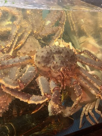 Crabfest 🦀