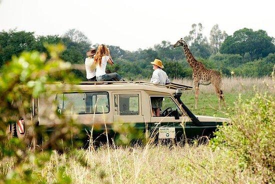 Safari privato 9 giorni in Kenya