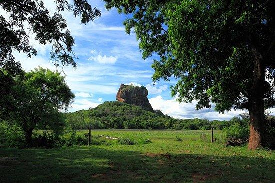 Sigiriya Rock and Wild Elephant Safari from Negombo (Private Day Tour): Sigiriya Rock and Minneriya National Park Private Tour from Negombo