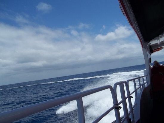 جنوب المحيط الهادئ: Depois de observar a baleia, todos recolocam seus cintos de segurança e barco acelera novamente. Pura adrenalina!
