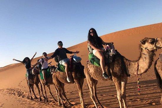 撒哈拉旅游3天