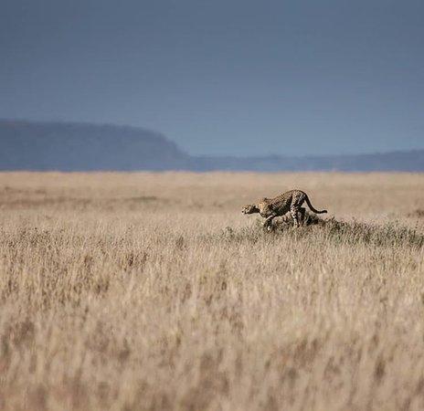 Wild Kings Africa