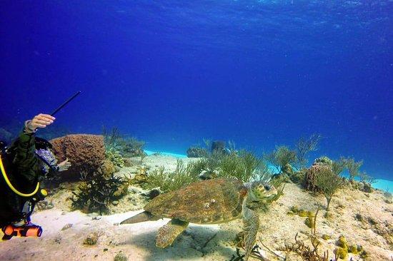 Agua Clara diving Cozumel