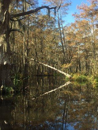 Dr Wagner S Honey Island Swamp Tours Slidell 2020 All