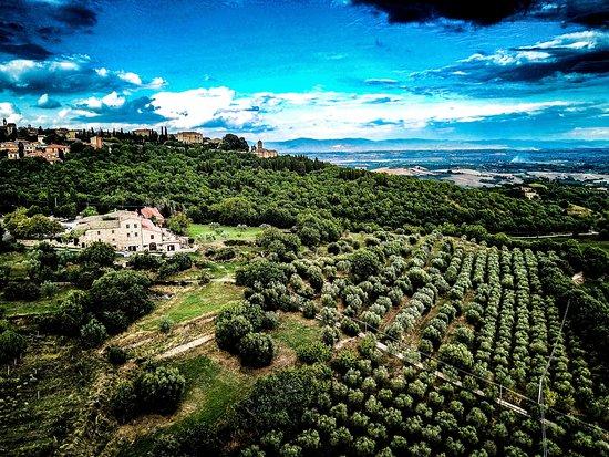Montefollonico Φωτογραφία