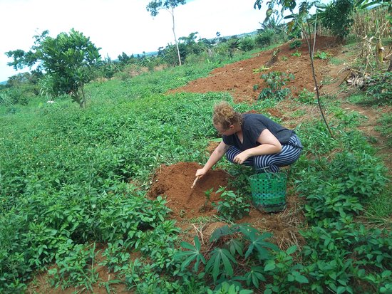 Kasangati, Уганда: Emma Harris a volunteer from the Australia volunteering to plant Cassava at the farm for food to support the needy children at Saint Ann Foundation.
