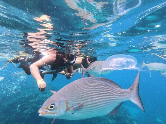 Snorkeling Tour Varadero