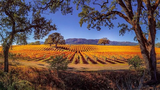 Sonoma County, CA: Nothing but clear blue skies and fall colors right now in @SonomaCountyTourism  🍂 #GatherInSonoma #CALove #CaliforniaNow 📷: @kyerton