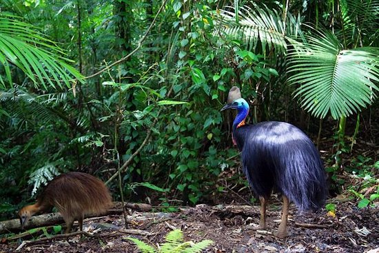Daintree Great barrier Reef Tours