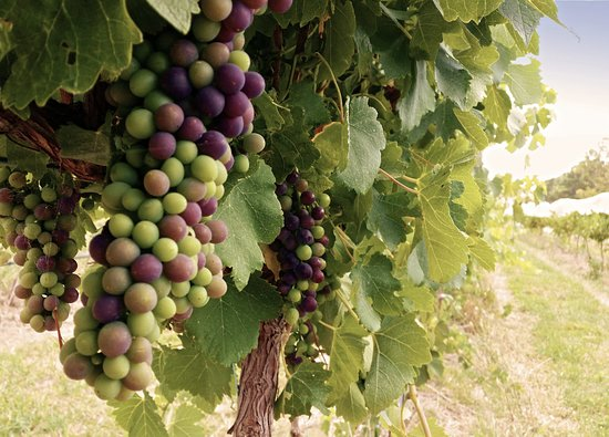 We also offer vineyard and winery tours where the grapegrower and winemaker will talk you through our processes and we can taste wines directly from the barrel.