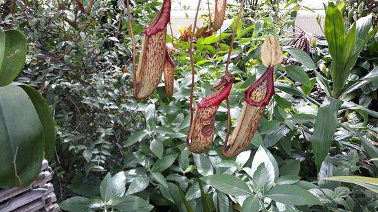 Fiori Tropicali.Fiori Tropicali Picture Of Allan Gardens Conservatory Toronto
