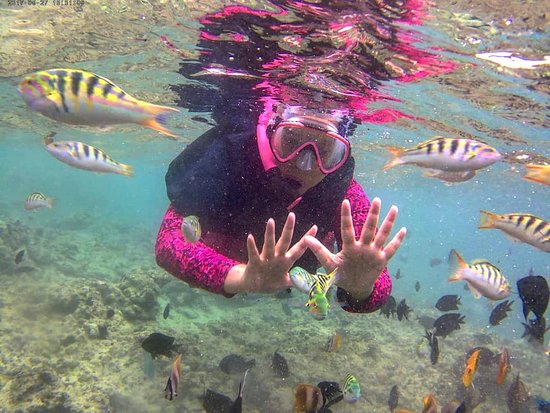 Остров Бунакен, Индонезия: I did it. Snorkeling at Bunaken. Many beautiful fish. Just feeding the fish with biscuits and then they come to me so many.