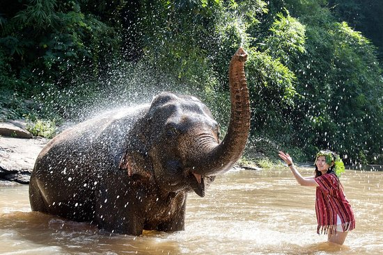 Chiang Mai Elephant Friends