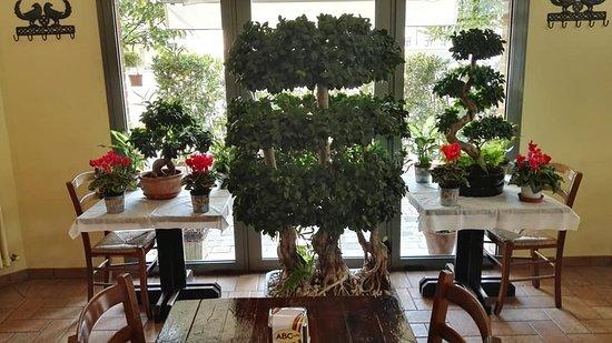 le nostre piante vere