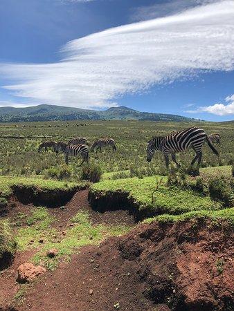4 days Safari: Serengeti, Ngorongoro and Tarangire