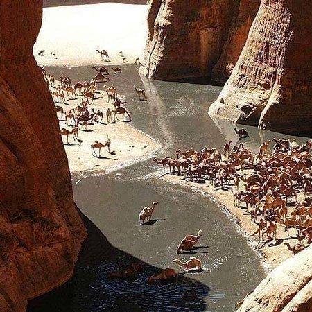 Bir Shalatein, Egipto: Das Tal der Kamele