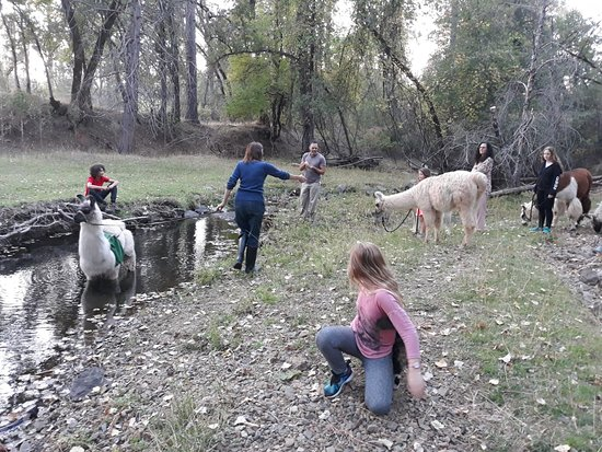 Oregon House, CA: Sarah demonstrates how the Llama can pass the water