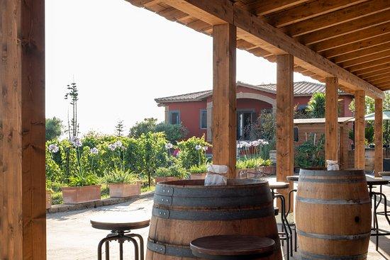 Cerveteri, Italy: Degustare un calice di vino guardando il vigneto......