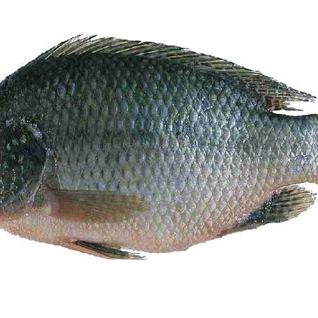 Jhelum, פקיסטן: تلاپیا مچھلی(چڑا مچھلی)  باربی کیو  بہترین لذت کے ساتھ   Tilapia fish bar be que  is available  at khursheed family restaurant
