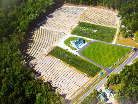 Hammonton, NJ: This is our farm's beautiful blueberry plants nursery and u-pick blueberry farm where you can go blueberry picking in NJ every summer in June, July and August. Call (609) 561-5905 to schedule an appointment first. Thank you.