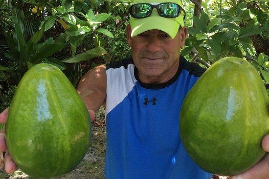 Lloyd's Tropical Key West Bike Tour