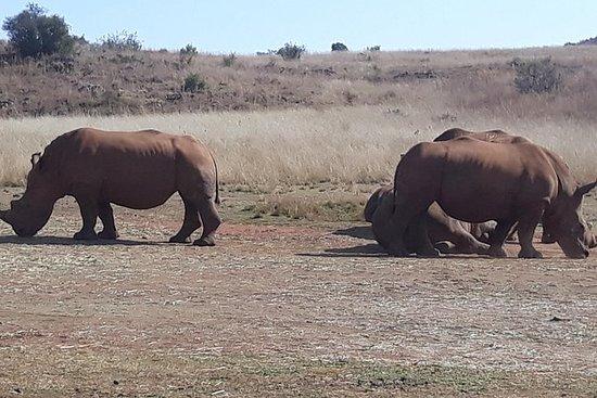 犀牛和狮子公园之旅