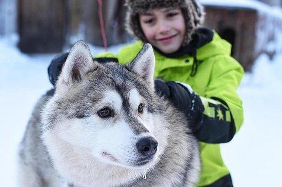 Husky Safari van Levi inclusief een ...