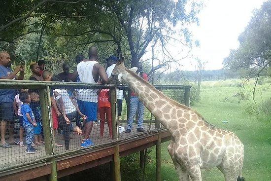 Parque Rhino y Lion (domingos...