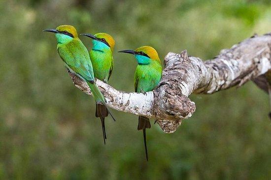 Observación de aves en el santuario de...