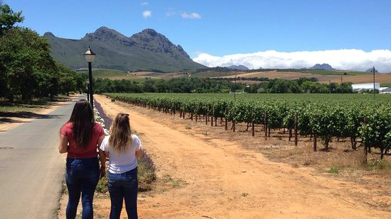 Beyond The Vine Wine Tours