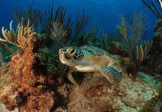 Sea Ventures Dive Center