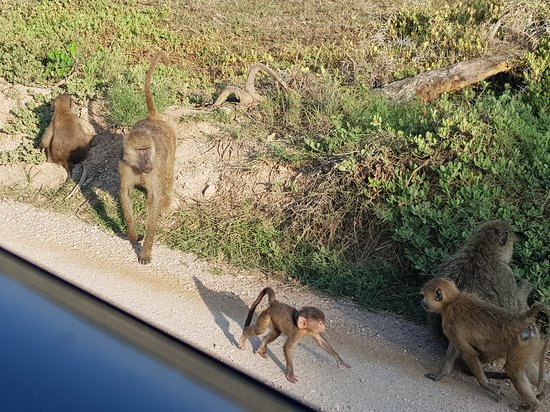Safari met Safari Charo