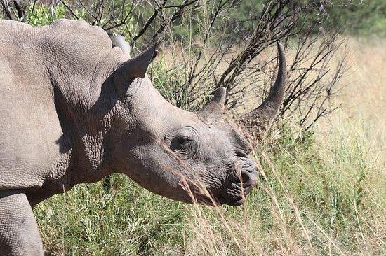 Reserva natural de rinocerontes y...