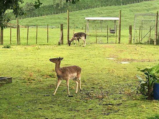 Deer story museum