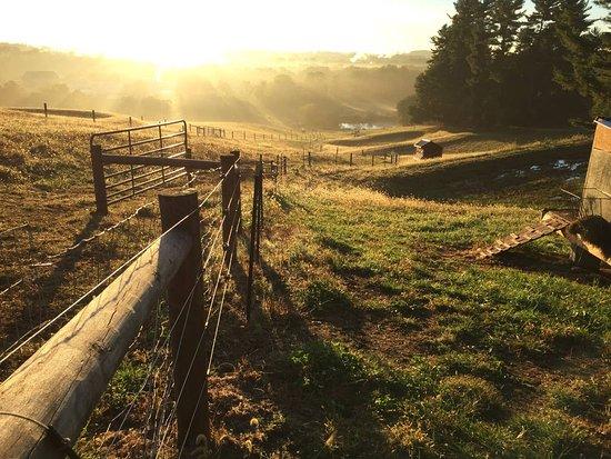 Avondale HIlls Farm