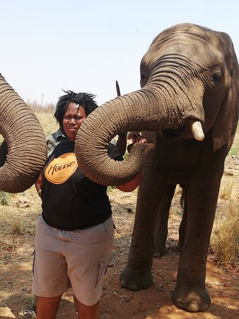 A rare opportunity to do attraction and feeding elephant ,come and experience it.